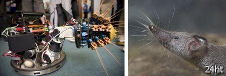 Усатый робот Shrewbot (2 фото + видео)
