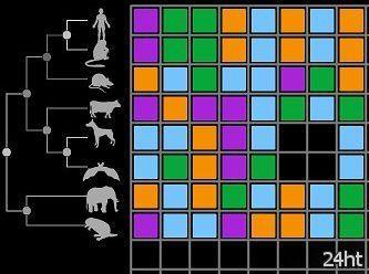 Геймеры победили компьютер в игре с ДНК