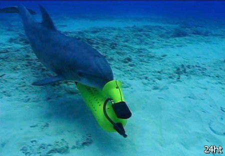 ВМС США заменят дельфинов роботами-саперами