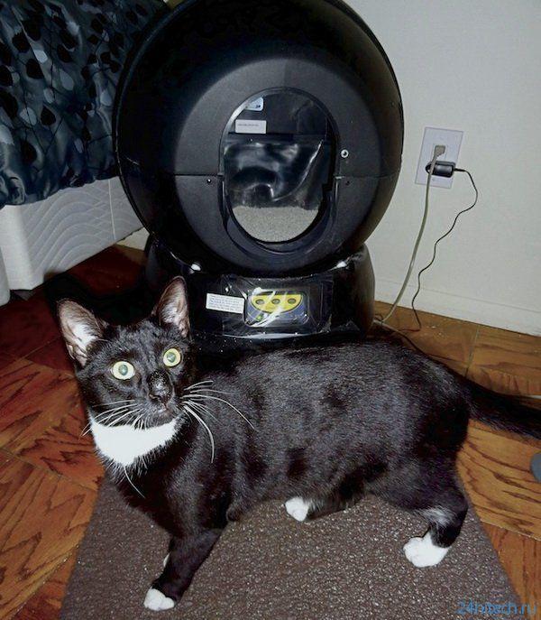 Коты тестируют роботизированный лоток