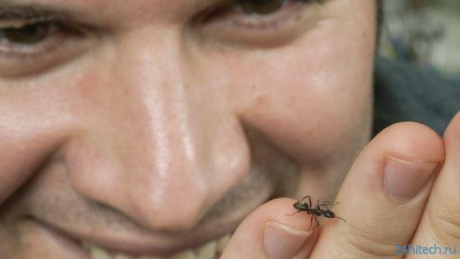 Особенность строения муравьев позволит увеличить силу и прочность роботов