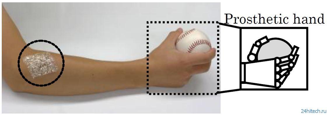 Представлен 1-мкм бионический сенсорный лист