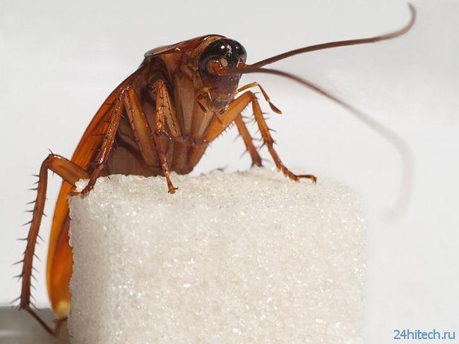 Ученые предлагают использовать тараканов для создания беспроводных сетей