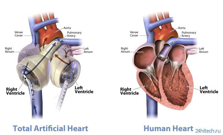 Учёные занялись созданием сердца при помощи 3D-печати