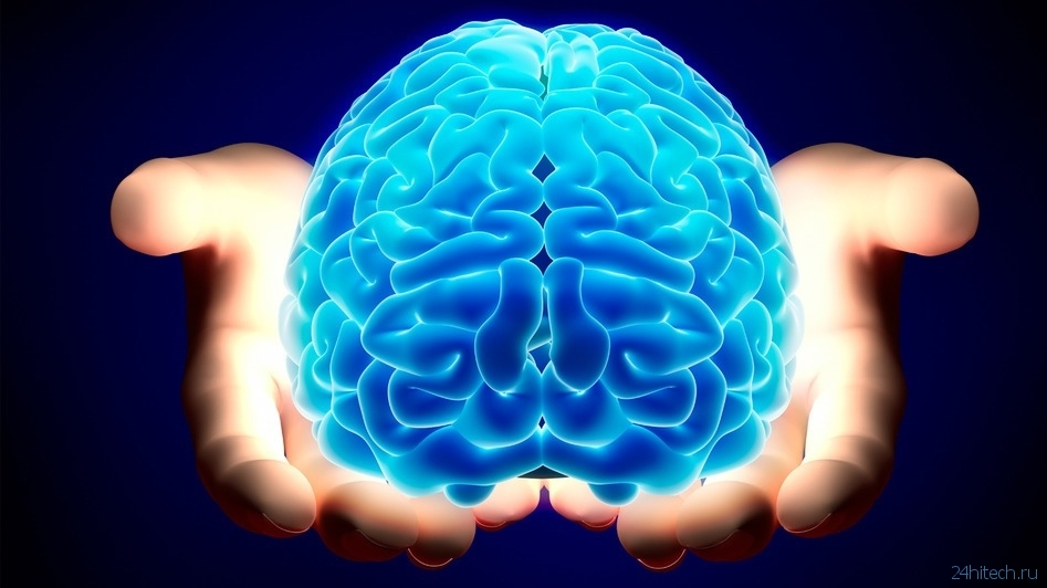 an essay on the importance and role of the human brain Understanding the basic anatomy and physiology of the human body the nervous system the nervous system is responsible for coordinating all of the body's activities.