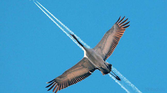 Французские конструкторы разработали самолет-птицу