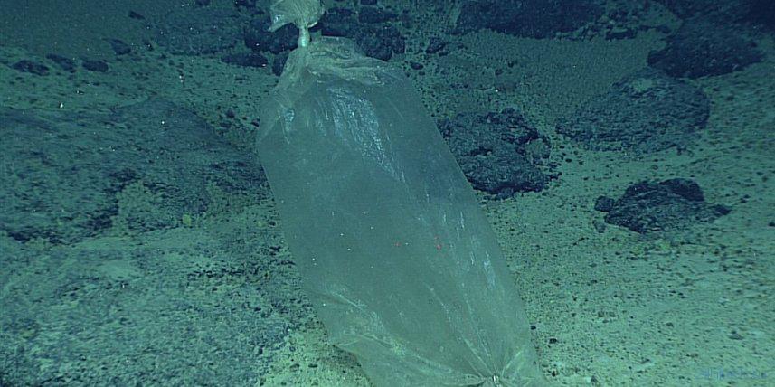 Даже самые темные глубины океана небезопасны из пластикового мусора