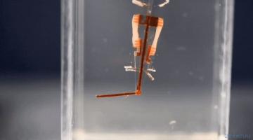 Киборги здесь: ученые поместили живые клетки в палец робота