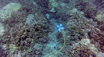 В Австралии дайверов заменили роботами для охраны рифа