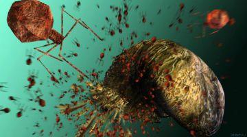 Подслушивающие вирусы оказались эффективными убийцами бактерий