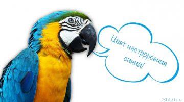 Говорящий попугай: какие птицы говорят, легче всего учатся и как научить говорить