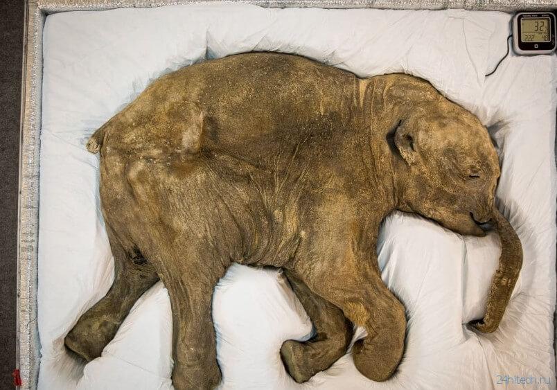 Редкий случай: в России найден полный скелет мамонта